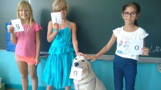 Visuel : Un élève à quatre pattes en CE1 Turquoise
